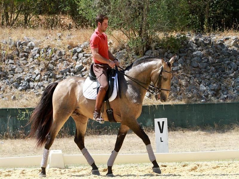 cavalos-para-venda-chamariz-1