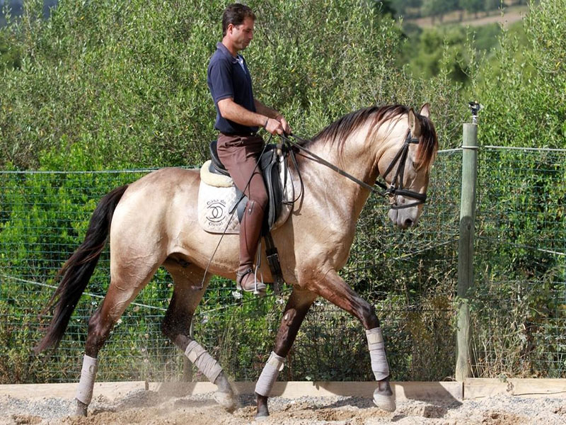 cavalos-para-venda-chamariz-2