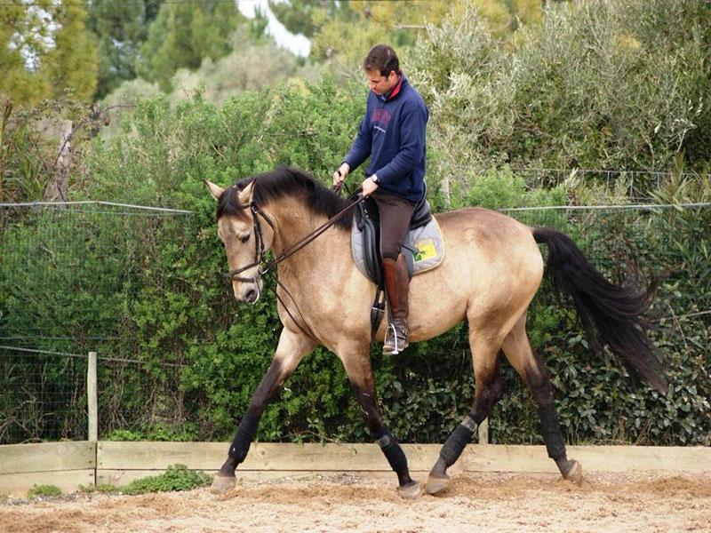 cavalos-para-venda-chamariz-4