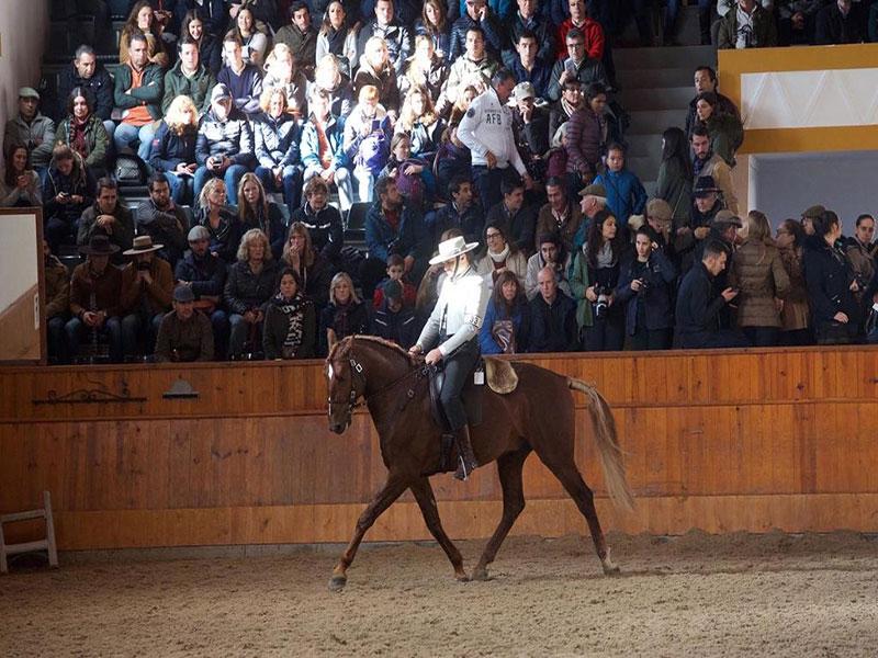 cavalos-para-venda-joio-4
