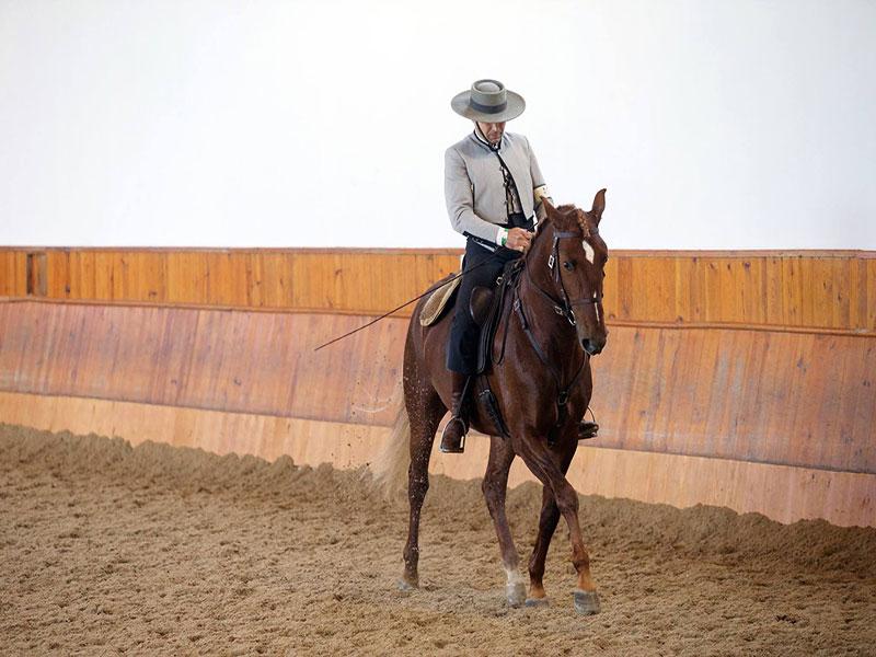 cavalos-para-venda-joio-5