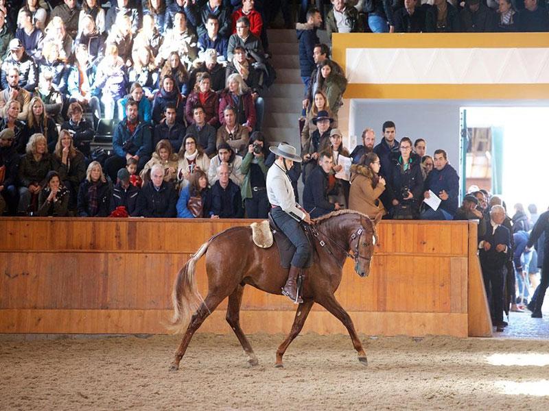 cavalos-para-venda-joio-6