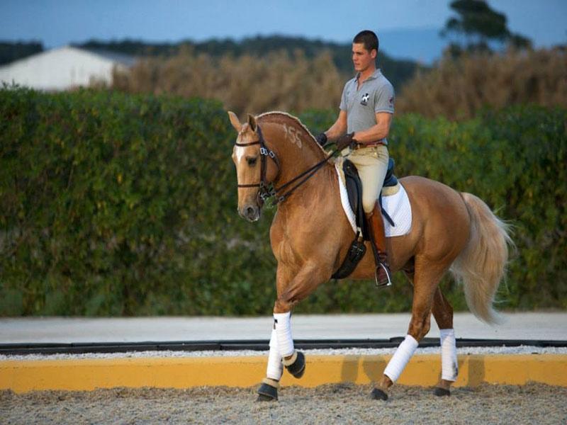 cavalos-para-venda-trigo-1