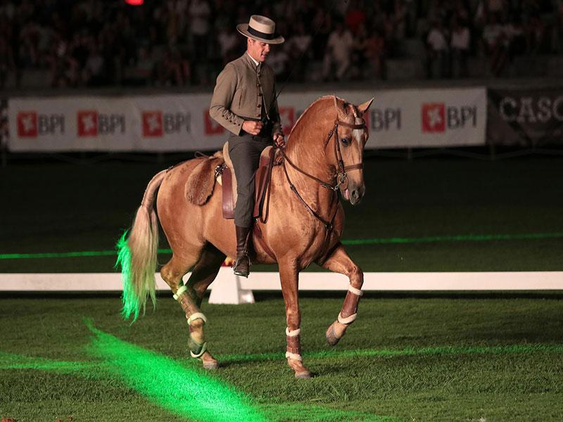cavalos-para-venda-trigo-2