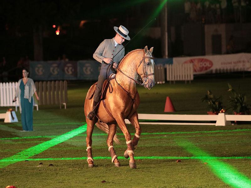 cavalos-para-venda-trigo-3