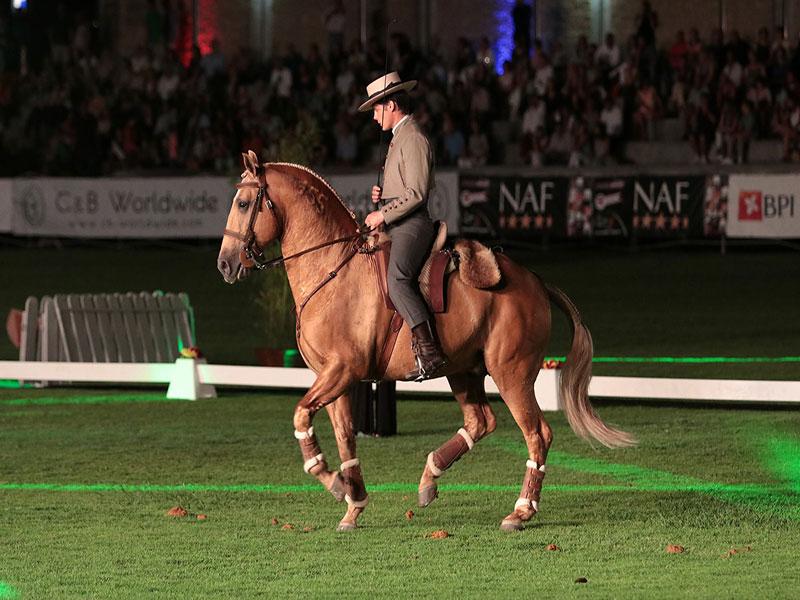 cavalos-para-venda-trigo-4