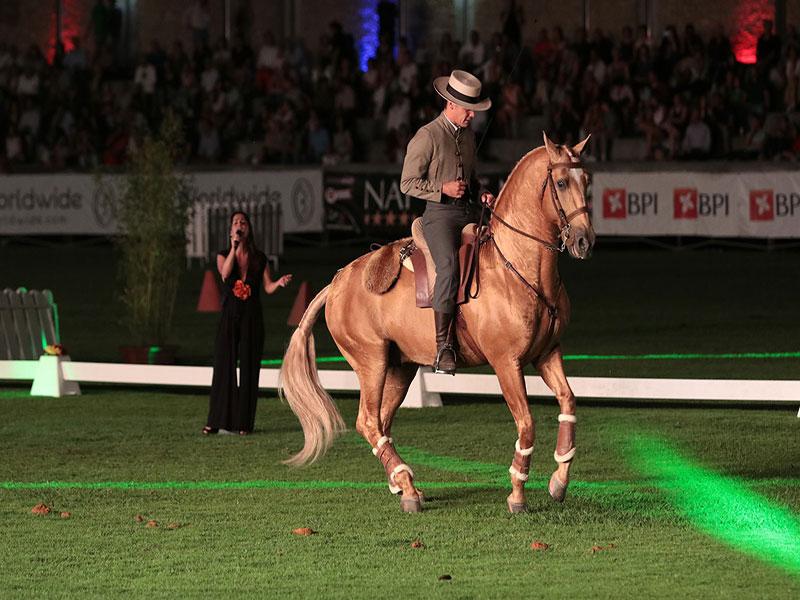 cavalos-para-venda-trigo-5