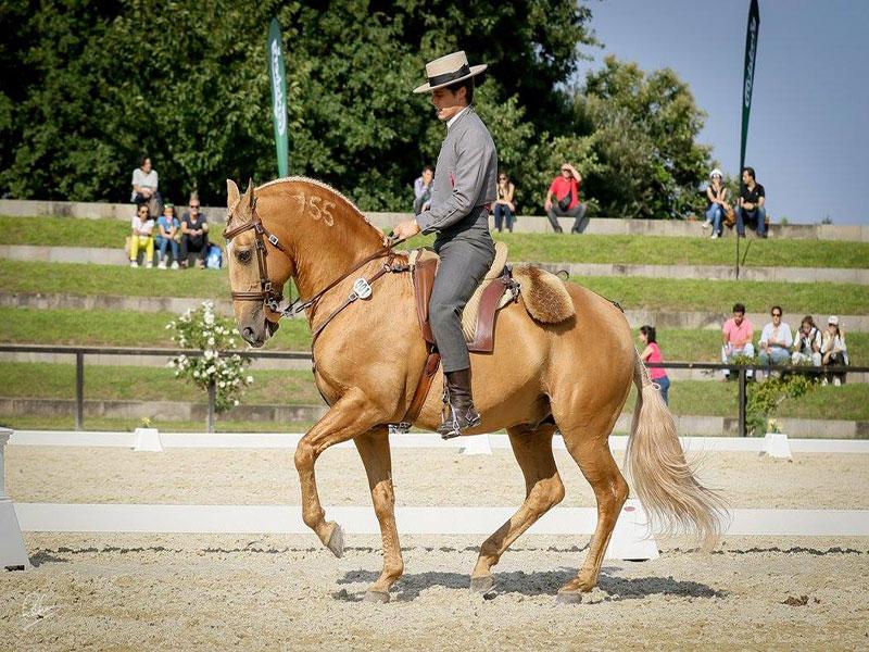 cavalos-para-venda-trigo-6